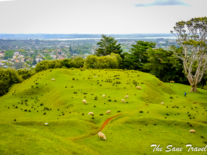 10 auckland from above thesanetravel.com 1310088