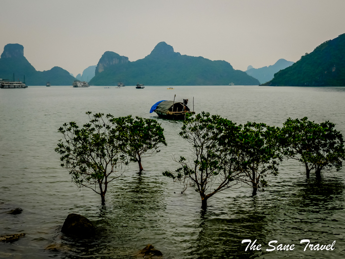 3 halong bay www.thesanetravel.com