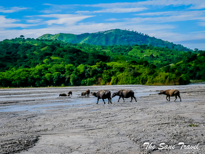 7 water buffalos philippines www.thesanetravel.com 1150453