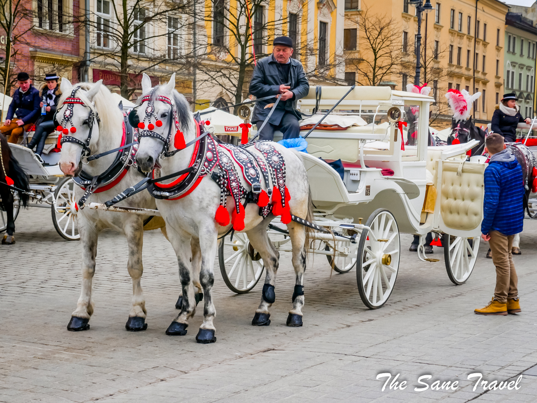 krakow white horse carriage