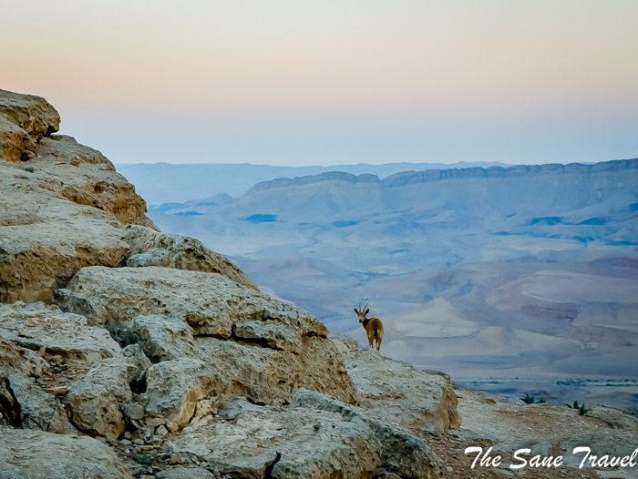 5 things to know about hiking Ramon crater in Israel