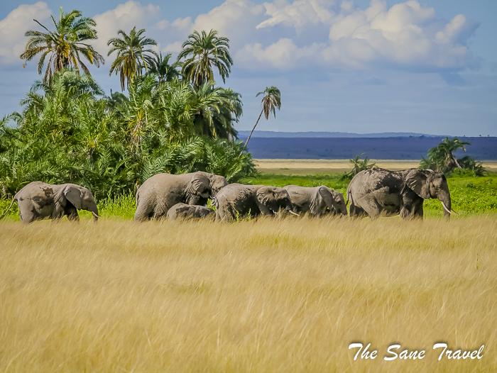 7 reasons to visit the Amboseli National Park, Kenya