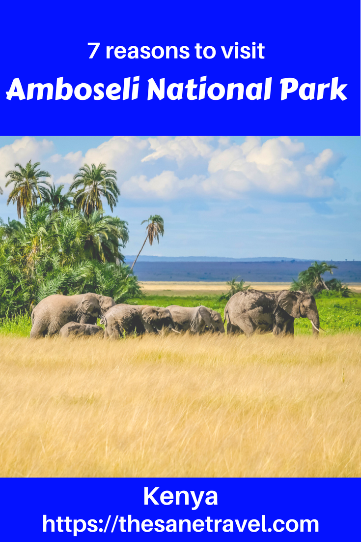 Have you ever dreamed about African safari? Then Amboseli National Park in Kenya has to be on your list! It's one of the most popular Kenya National parks with awesome views of Mount Kilimanjaro an opportunity to stay in awesome Amboseli Serena lodge. Save those great reasons to visit Amboseli National Park to your travel board so you can find it later. #travel #africansafari #amboselinationalpark #kenyanationalparks #amboseliserenalodge  #mountKilimanjaro #travelphotography #travelblog