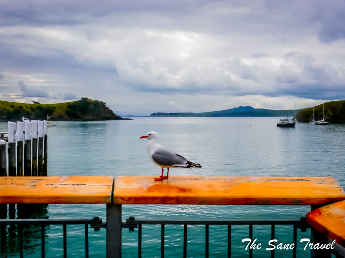 8 waiheke island boat station new zealand www.thesanetravel.com 1340501