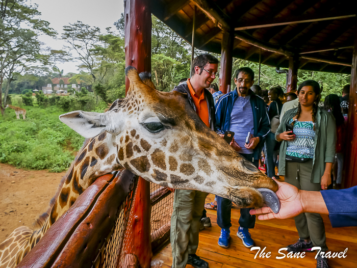 23giraffe center nairobi thesanetravel.com 1470627