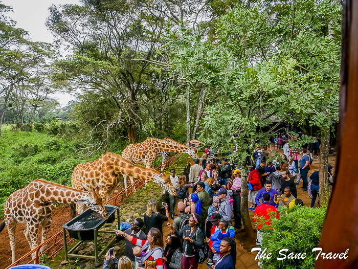 27giraffe center nairobi thesanetravel.com 1470684