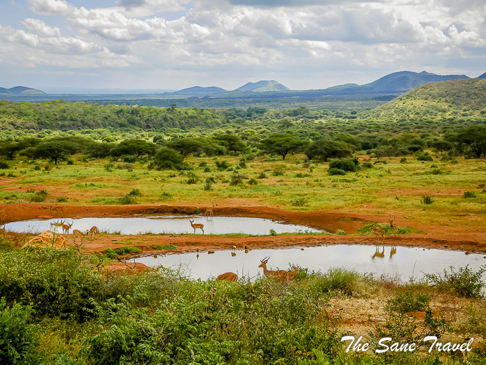 62 serena tsavo west kenya thesanetravel.com 1500863