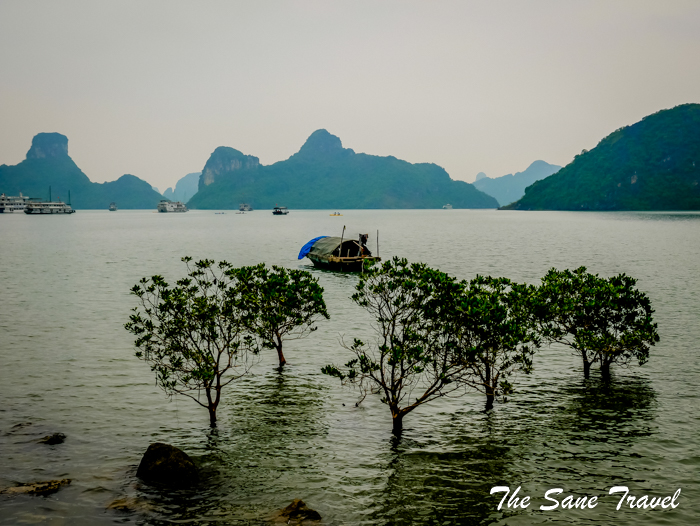halong bay trees thesanetravel.com 1020101