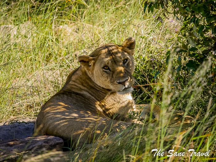 b39e7717208e How to plan your Kenya safari holidays